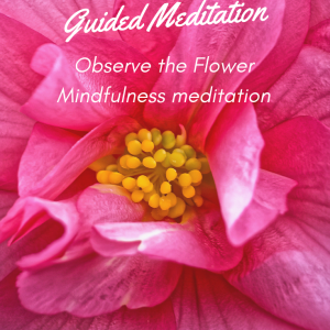 Observe the flower Mindfulness Meditation